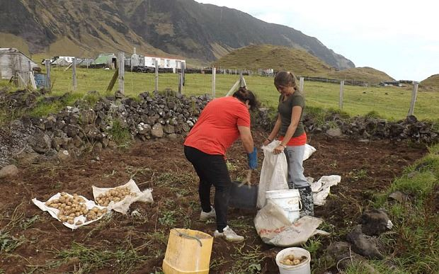 Growers Wanted On Remote Island Tristan Da Cunha Needs