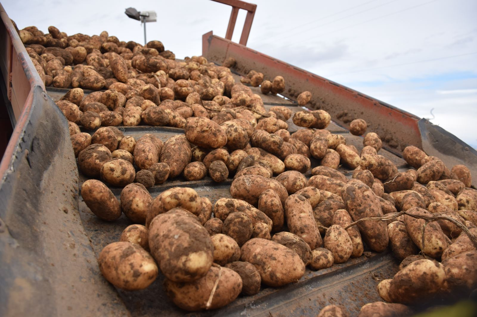Global Fry Shortage Likely Looming | Potato Grower Magazine