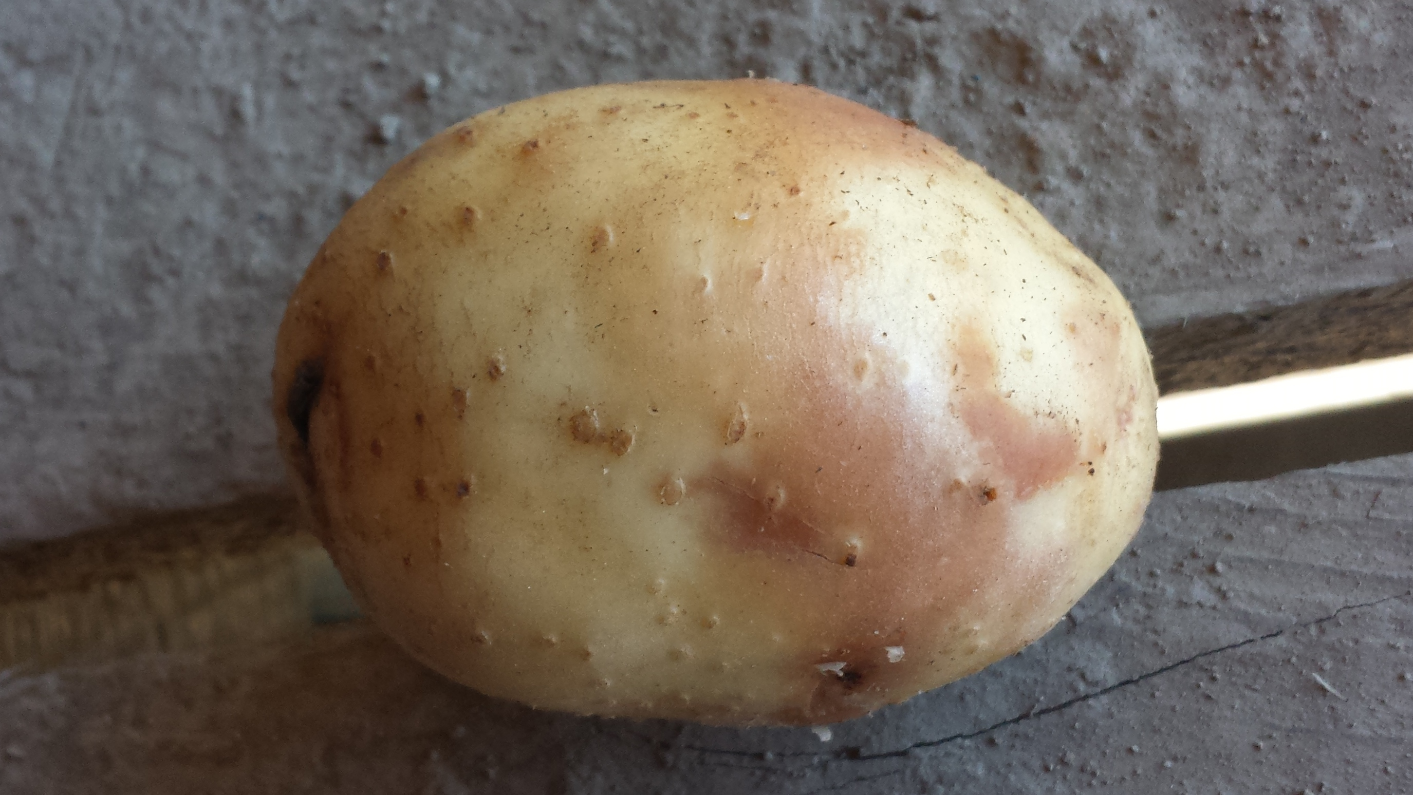 Top 5 Understanding Pink Eye Of Potato Potato Grower Magazine